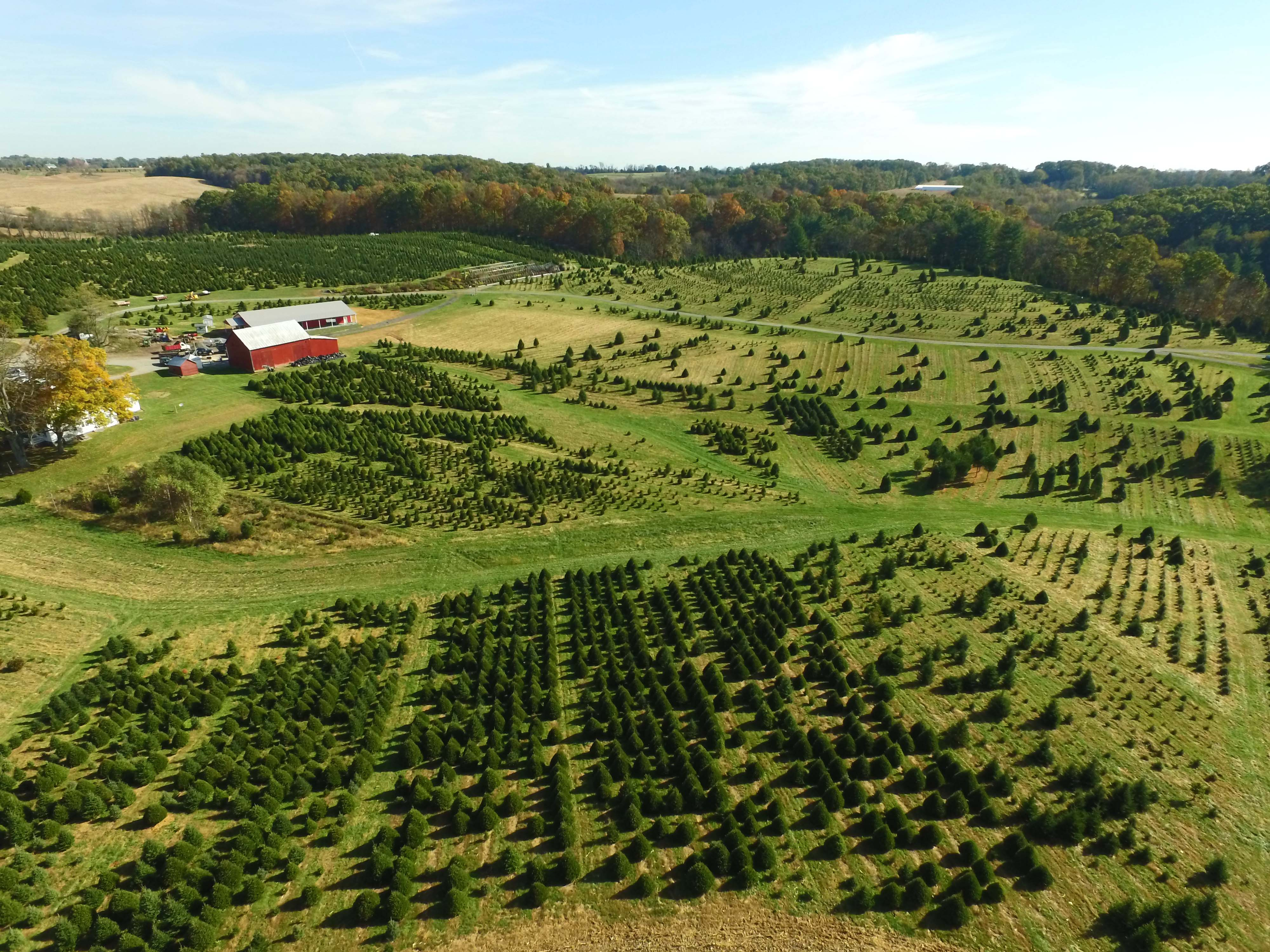 Cut Your Own Christmas Tree Farms